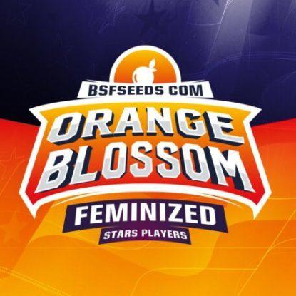 Logo de Orange Blossom de semillas feminizadas