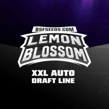 Logo semillas autoflorecientes de Lemon Blossom