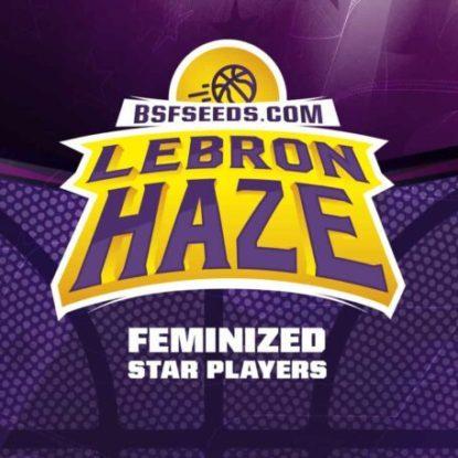 Logo semillas feminizadas de Lebron Haze