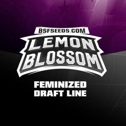 Logo semillas feminizadas de Lemon Blossom