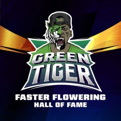 Logo de semillas de floracion rapida Green Tiger