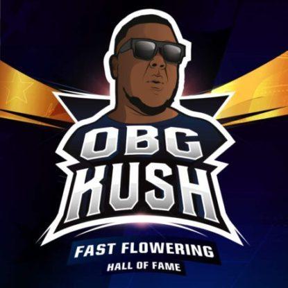 Logo de semillas de floracion rapida Obg Kush
