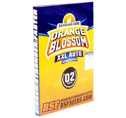 SensorySeeds Paquete Semillas Orange Blossom Autoflorecientes