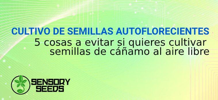 CULTIVO DE SEMILLAS AUTOFLORECIENTES