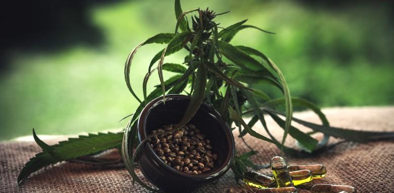 Conservación de las semillas de cáñamo