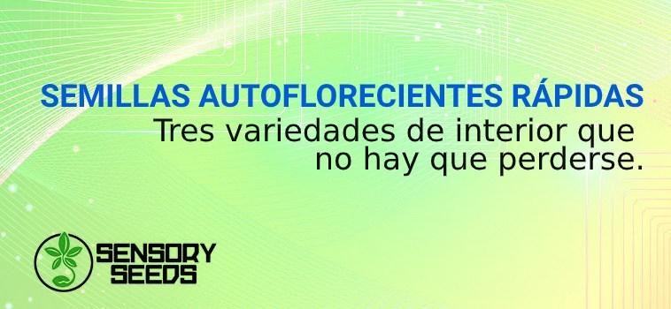 SEMILLAS AUTOFLORECIENTES RÁPIDAS PARA INTERIORES