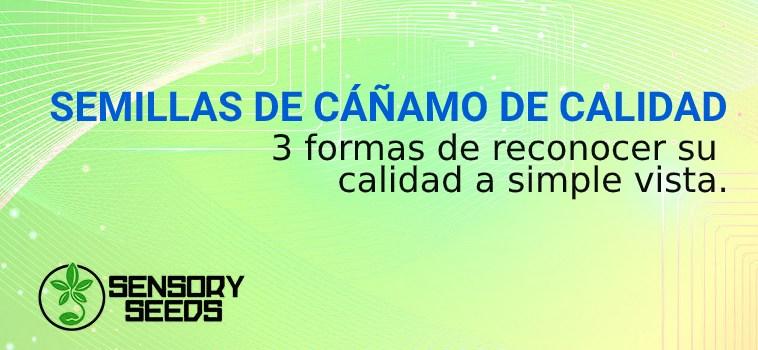 SEMILLAS DE CÁÑAMO DE CALIDAD