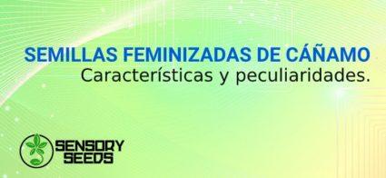 SEMILLAS FEMINIZADAS DE CÁÑAMO