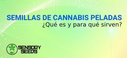 Semillas de Cannabis peladas