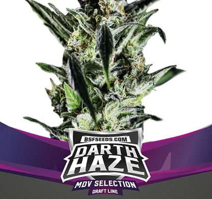 Semillas Cannabis Darth Haze