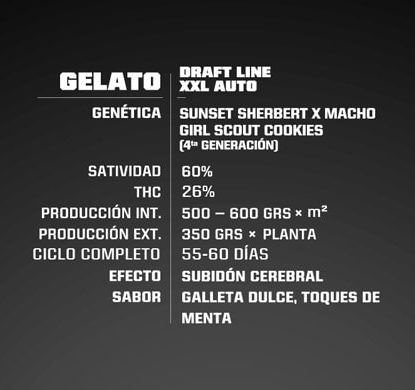 Description Gelato XXL de semillas autoflorecientes