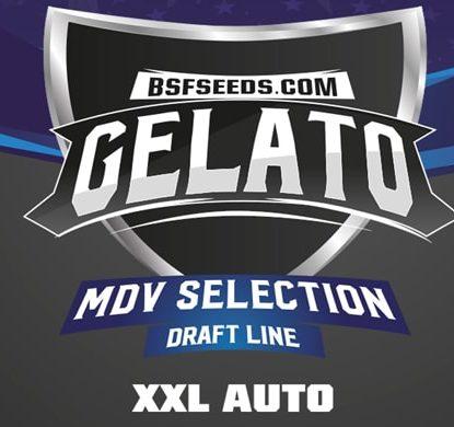 Etiqueta Gelato XXL de semillas autoflorecientes