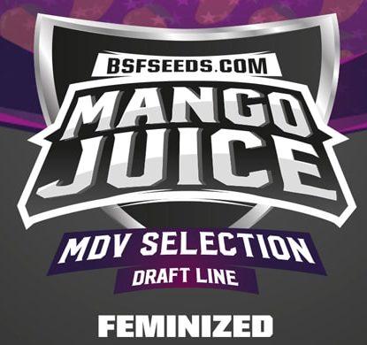 Logo Mango Juice de semillas feminizadas
