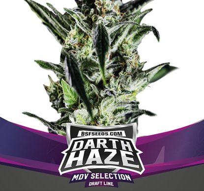 Planta de Darth Haze de semillas feminizadas