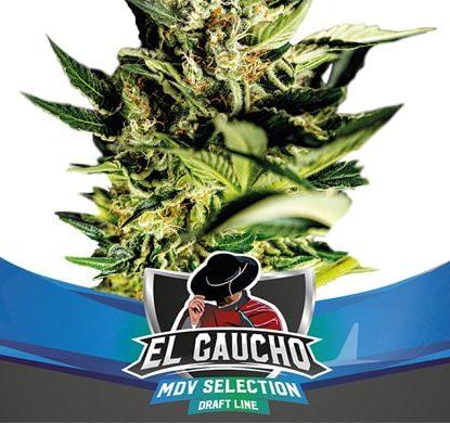 Planta de semillas de floracion rapida El Gaucho