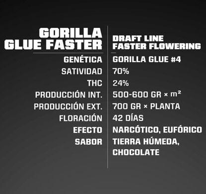 Info Gorilla Glue semillas Cannabis