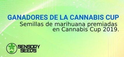 semillas de marihuana GANADORES