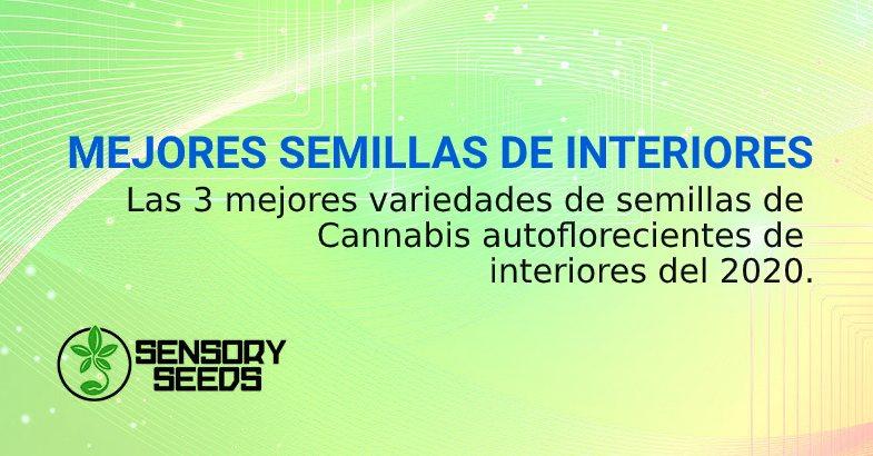 MEJORES SEMILLAS de cannabis DE INTERIORES