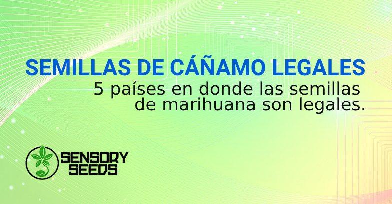 SEMILLAS DE CÁÑAMO LEGALES