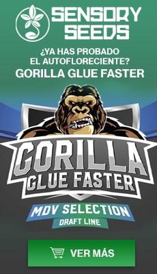 Banner Sensoryseeds Gorilla Glue semillas de floracion rapida