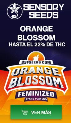 Banner Sensoryseeds Orange Blossom semillas de cannabis feminizadas