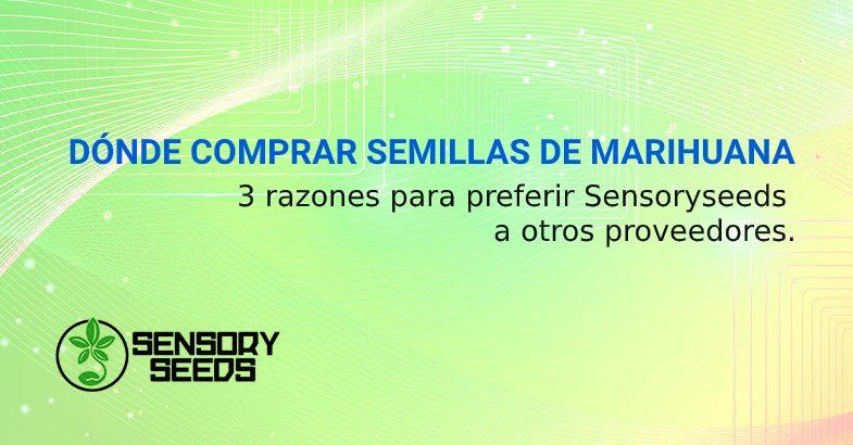 DÓNDE COMPRAR SEMILLAS DE CANNABIS