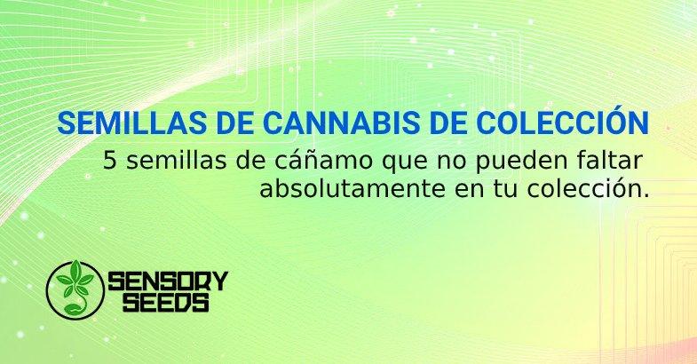SEMILLAS DE CANNABIS DE COLECCIÓN