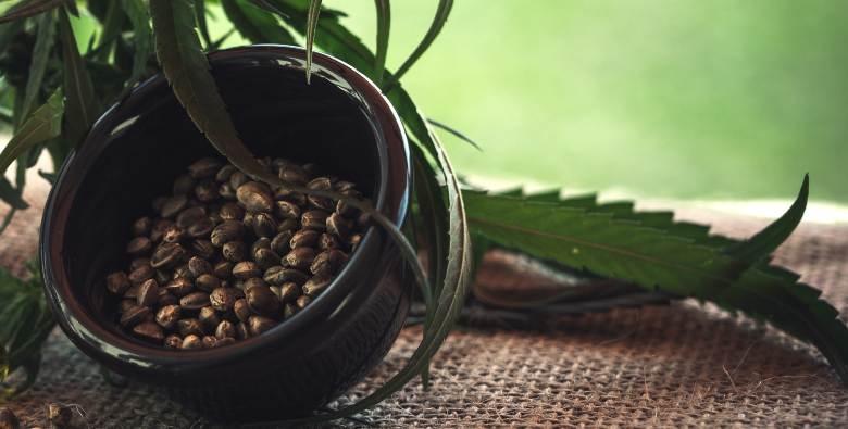 comprar semillas feminizadas online