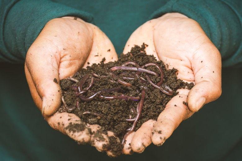 fertilizantes orgánicos para semillas de marihuana