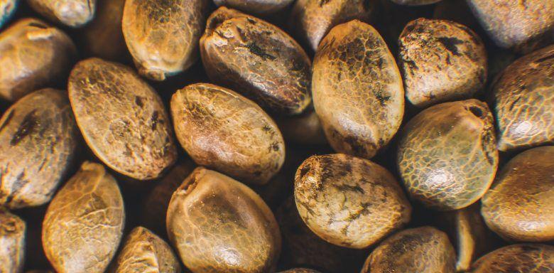 growshop online de semillas de cannabis