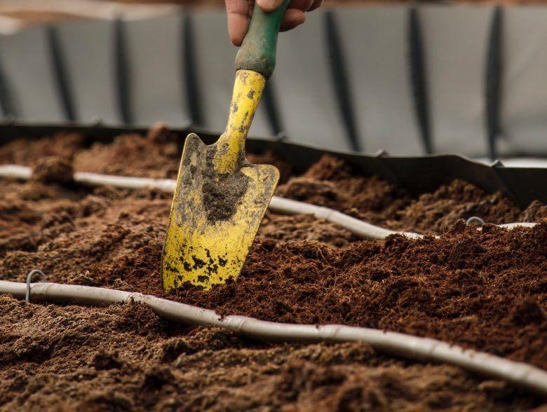 mejor suelo para el cultivo de semillas de cannabis