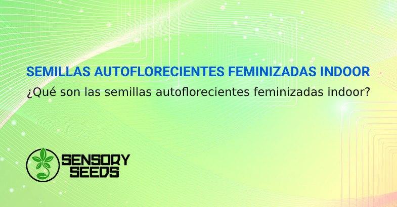 SEMILLAS AUTOFLORECIENTES FEMINIZADAS INDOOR