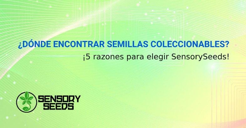 SEMILLAS DE CANNABIS COLECCIONABLES