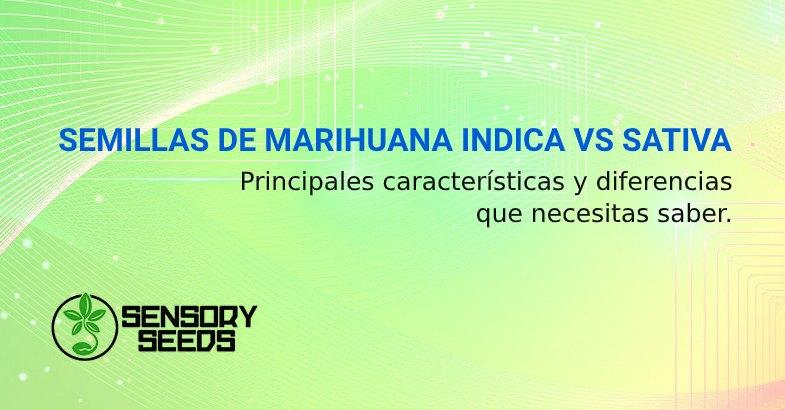 SEMILLAS DE MARIHUANA INDICA VS SATIVA