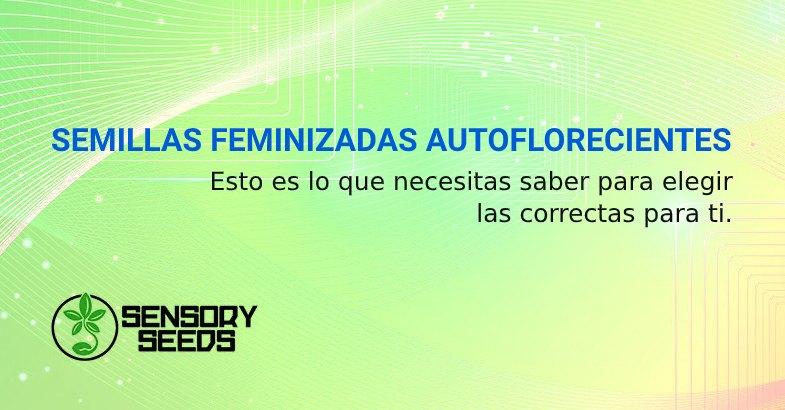 SEMILLAS FEMINIZADAS AUTOFLORECIENTES