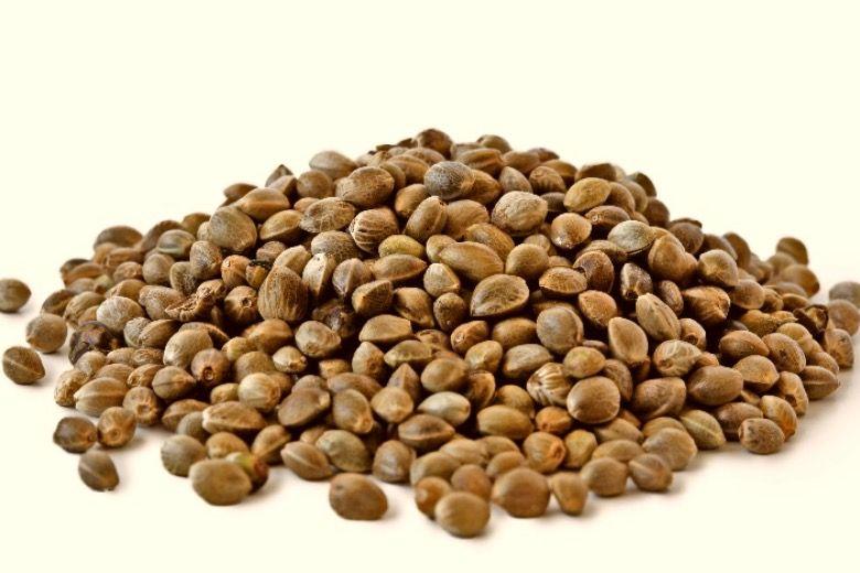 colección de semillas de marihuana