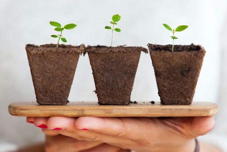 cultivar semillas de cannabis en el exterior o en el interior