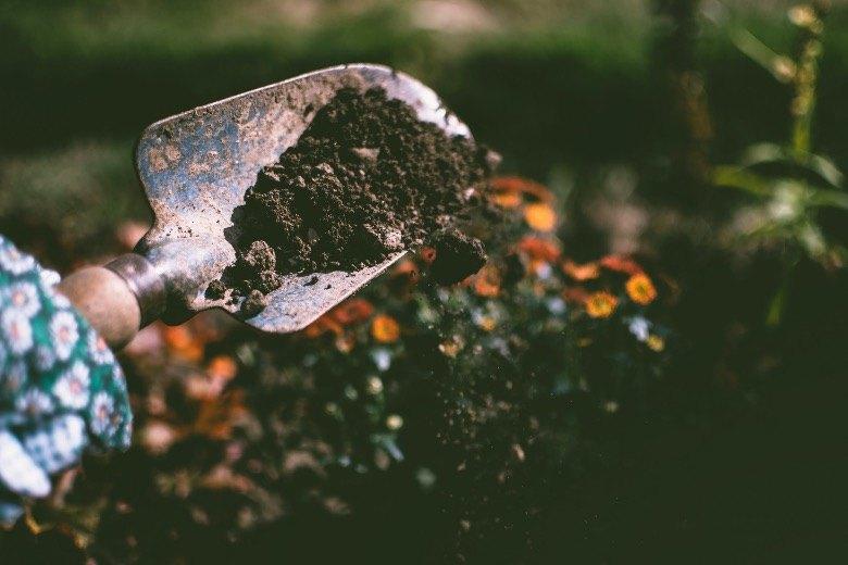 semillas autoflorecientes de tierra de germinación