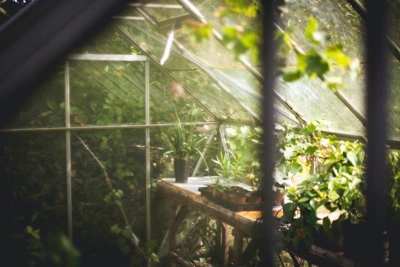 semillas autoflorecientes temperaturas invernales