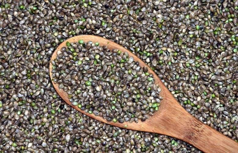 semillas de cannabis a la venta en espana