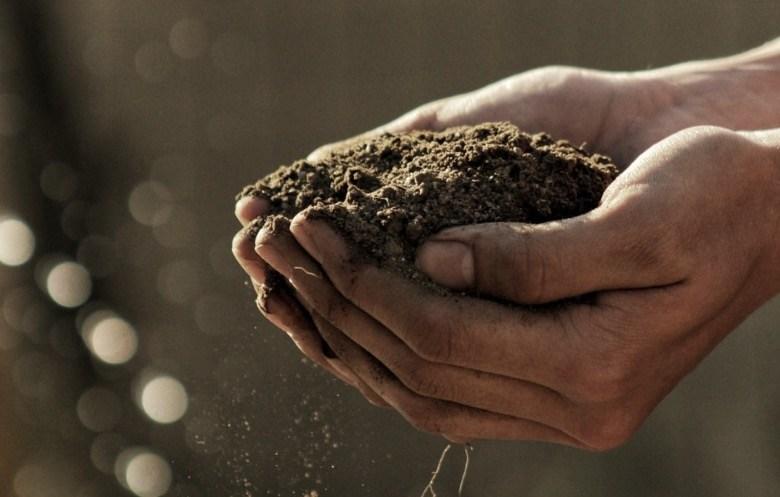 semillas de cannabis no germinadas