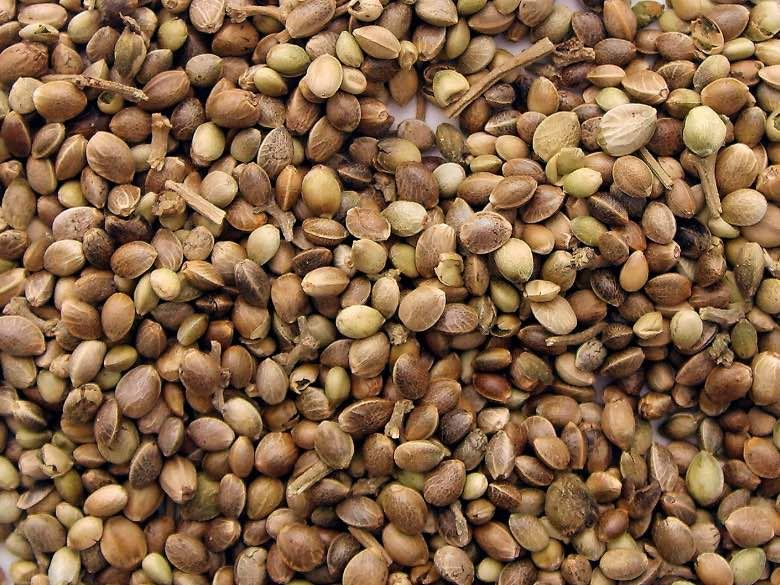 Comprar semillas de marihuana coleccionables es legal