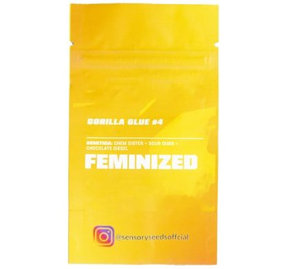 Descripción de semillas feminizadas a granel de Gorilla Glue 4