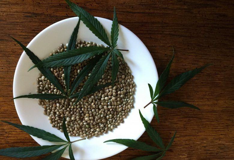 semillas de cannabis feminizadas al aire libre