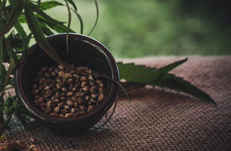 variedades de semillas de cannabis feminizadas
