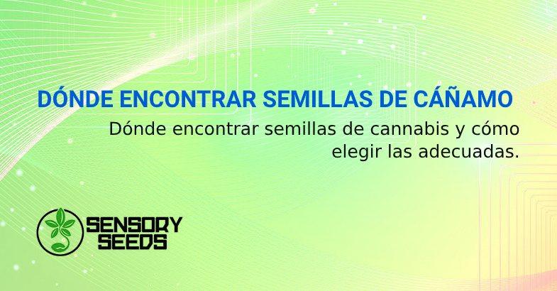 DÓNDE ENCONTRAR SEMILLAS DE CÁÑAMO