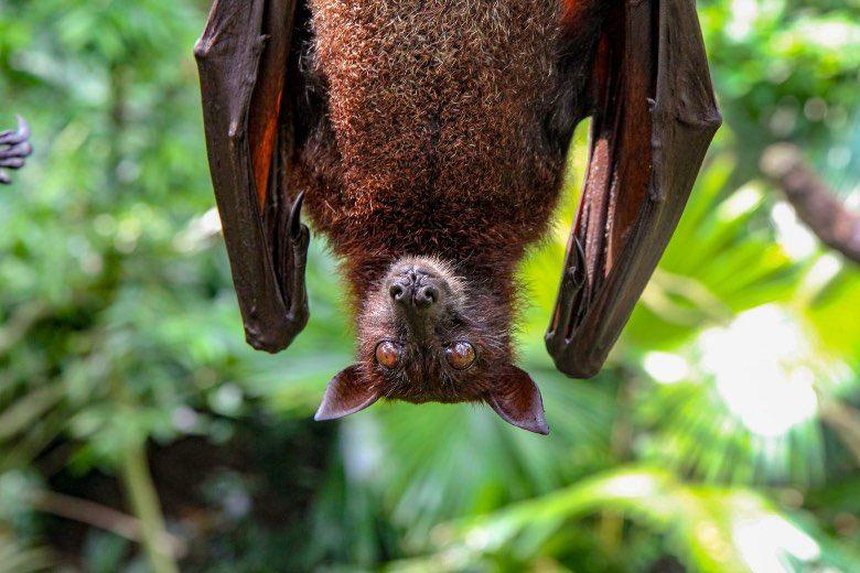 Qué es el guano de murciélago y semillas de cannabis
