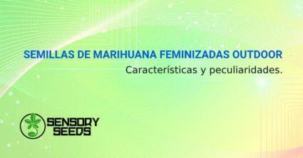SEMILLAS DE MARIHUANA FEMINIZADAS OUTDOOR