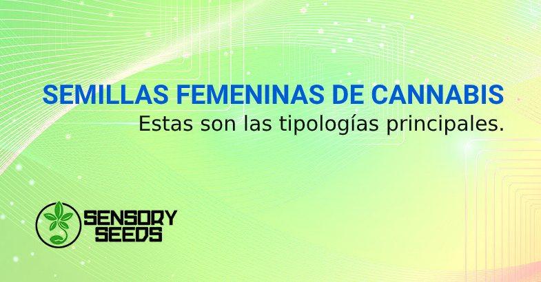 SEMILLAS FEMENINAS DE CANNABIS