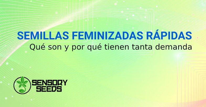 SEMILLAS FEMINIZADAS RÁPIDAS